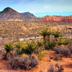 Casino online cuenta rut hotel Bellaggio Las Vegas 433584